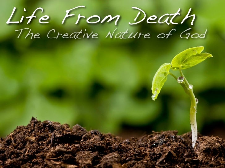Life From Death The Creative Nature of God