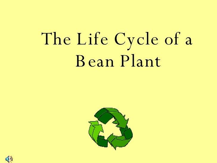 Lifecycleofabeanplant