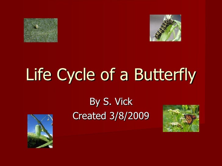 Life Cycle of a Butterfly By S. Vick Created 3/8/2009