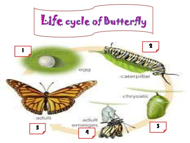 Life cycle of animals & worksheet