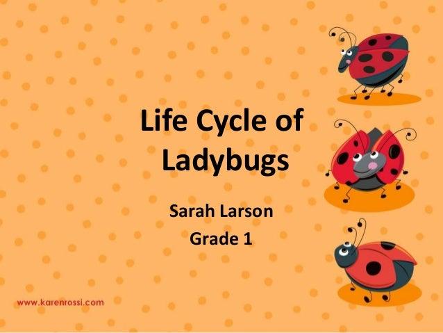 Life Cycle of Ladybugs Sarah Larson Grade 1