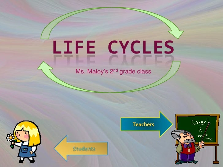 LIFE CYCLES  Ms. Maloy's 2nd grade class