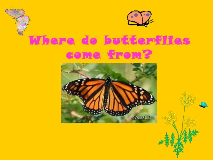 Where do butterflies come from?