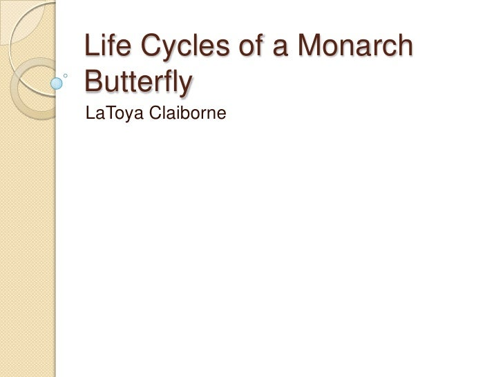 Life cycles of a monarch butterfly