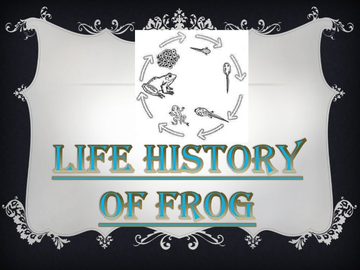 Life history of frog