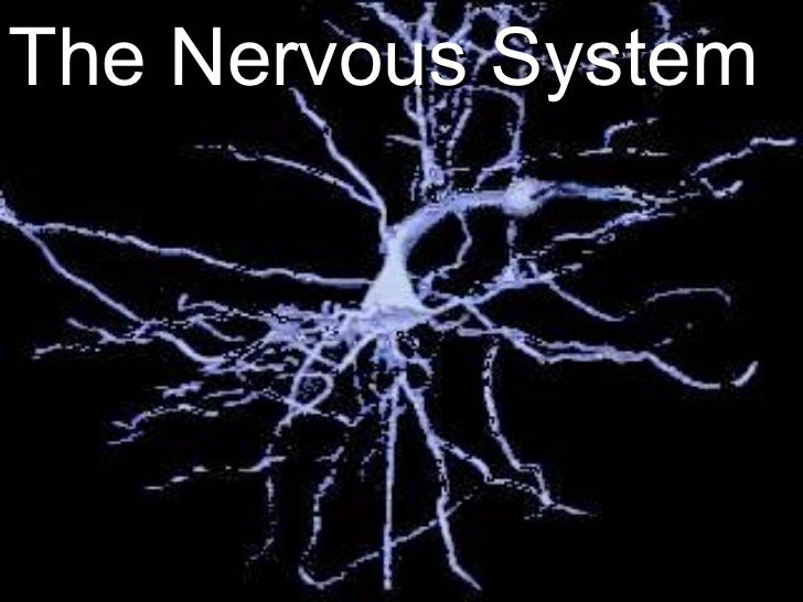 Life Science   Chapter 21   The Nervous System