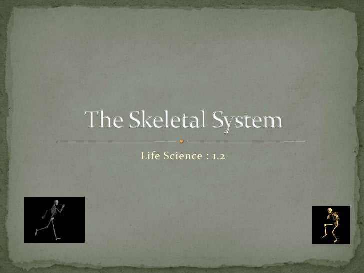 Life Science 1.2 : The Skeletal System
