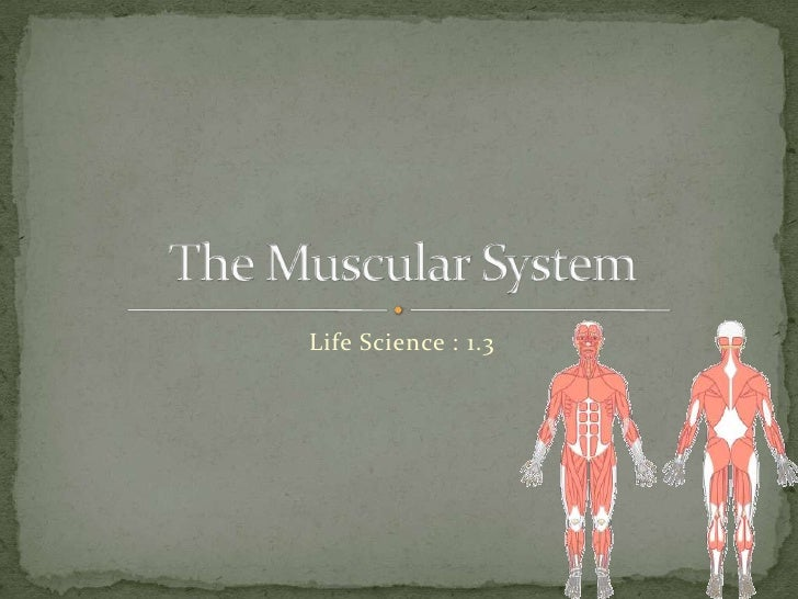 Life Science 1.3 : The Muscular System