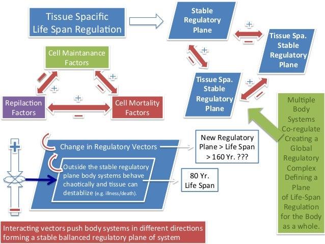 Regulatory Model of Dramatic Life Span Increase