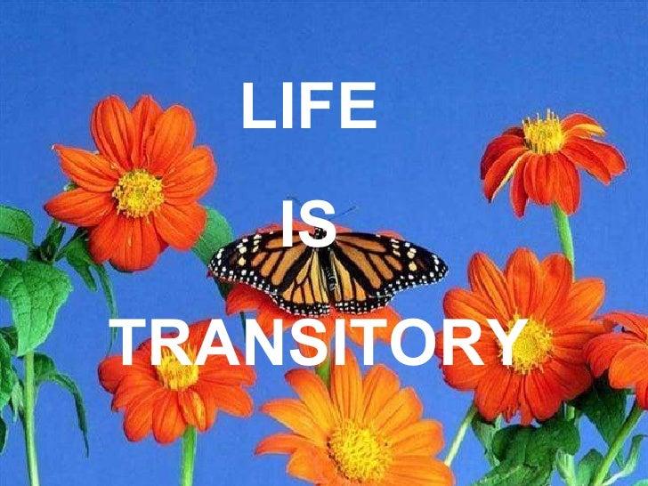 Lifes Transitory