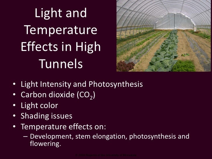 Light and      Temperature     Effects in High         Tunnels •   Light Intensity and Photosynthesis •   Carbon dioxide (...