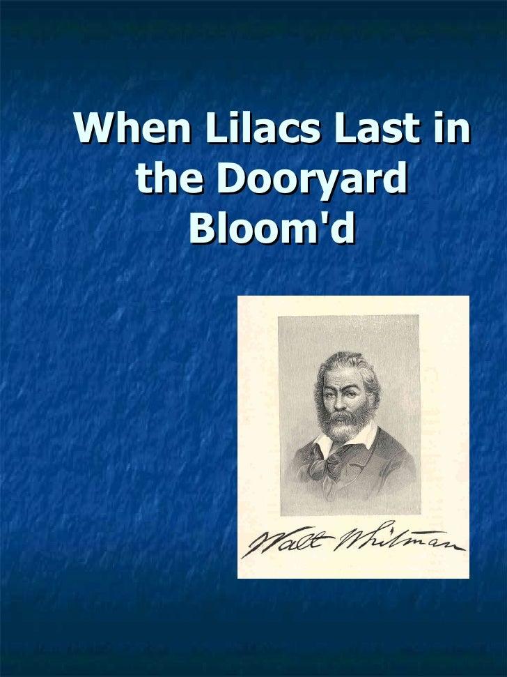 L I L A C S By  Walt  Whitman