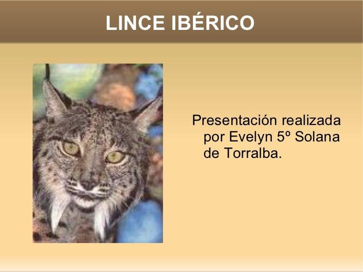 LINCE IBÉRICO <ul><li>Presentación realizada por Evelyn 5º Solana de Torralba. </li></ul>