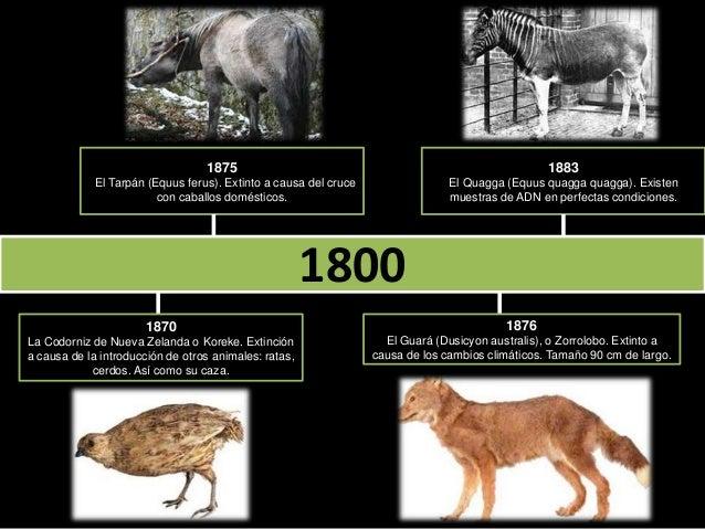 Linea de tiempo. Animales extintos