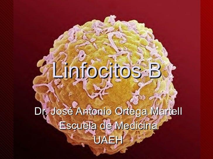 Linfocitos B Dr. José Antonio Ortega Martell Escuela de Medicina UAEH