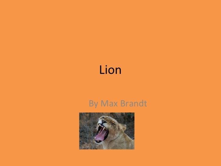 Lion By Max Brandt