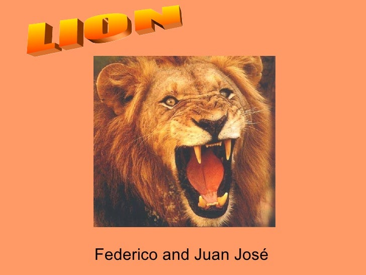 Lion   Fede and Juanjo