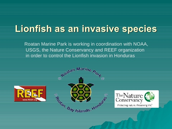 Lionfish as an invasive species Roatan Marine Park is working in coordination with NOAA,  USGS, the Nature Conservancy and...