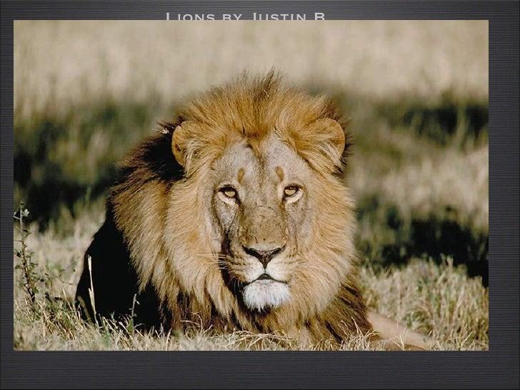 <ul><li>Lions by Justin B </li></ul>