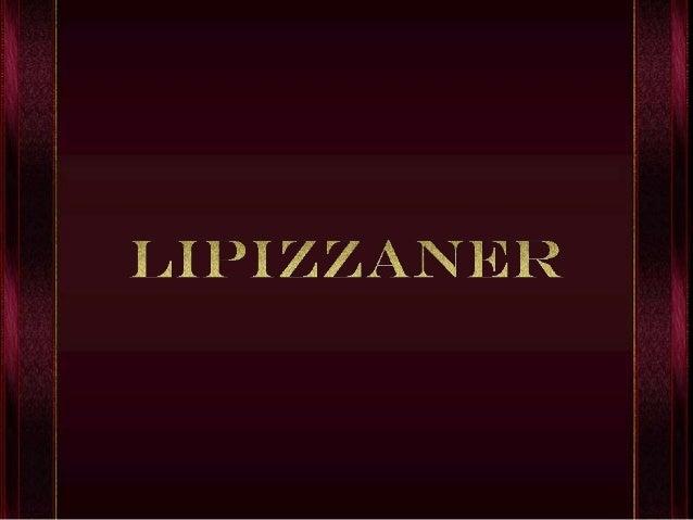 Lipizzan o Lipizzaner es una raza de caballo que según los primeros estudios, tiene su origen en la Aldea de Lipica cerca ...