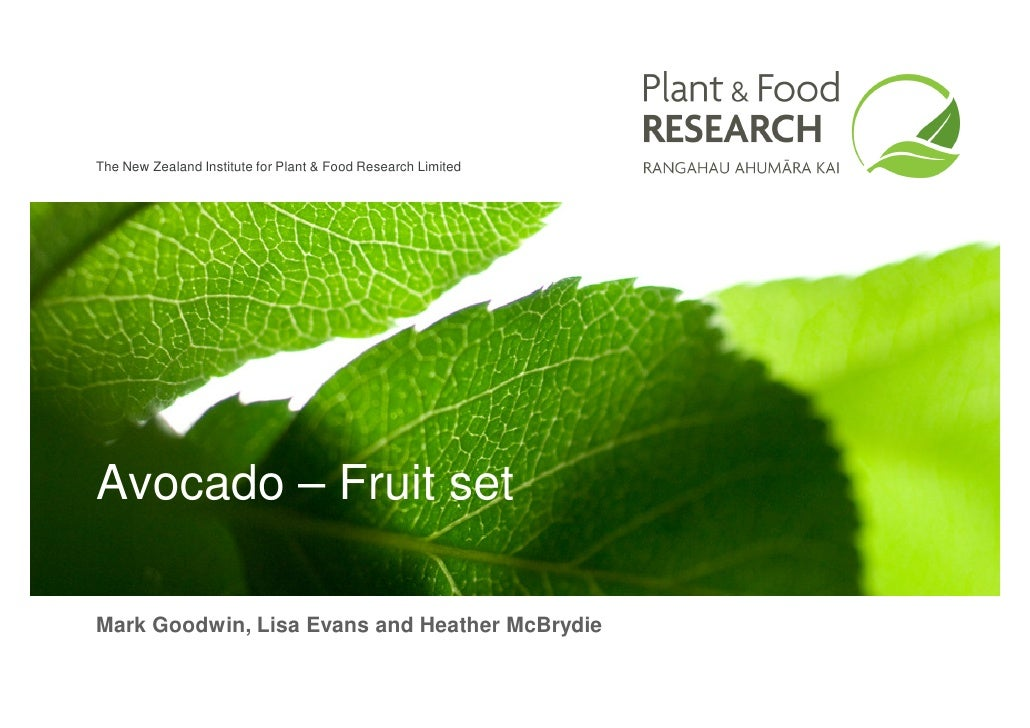 The New Zealand Institute for Plant & Food Research Limited     Avocado – Fruit set  Mark Goodwin, Lisa Evans and Heather ...