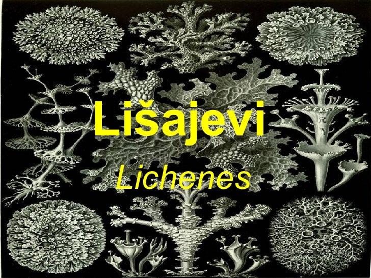 Lišajevi   Lichenes