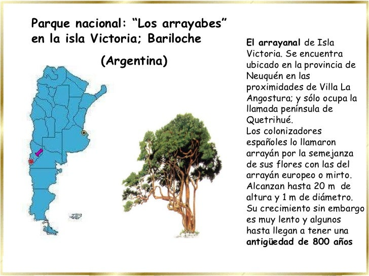El arrayanal  de Isla Victoria. Se encuentra ubicado en la provinciade Neuquén en las proximidades de Villa La Angostura;...
