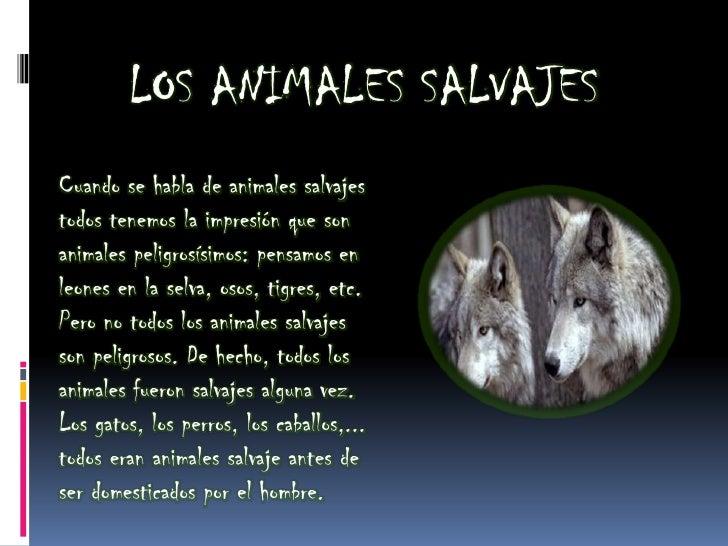 LOS ANIMALES SALVAJESCuando se habla de animales salvajestodos tenemos la impresión que sonanimales peligrosísimos: pensam...