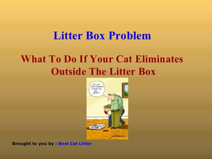 Litter Box Problem