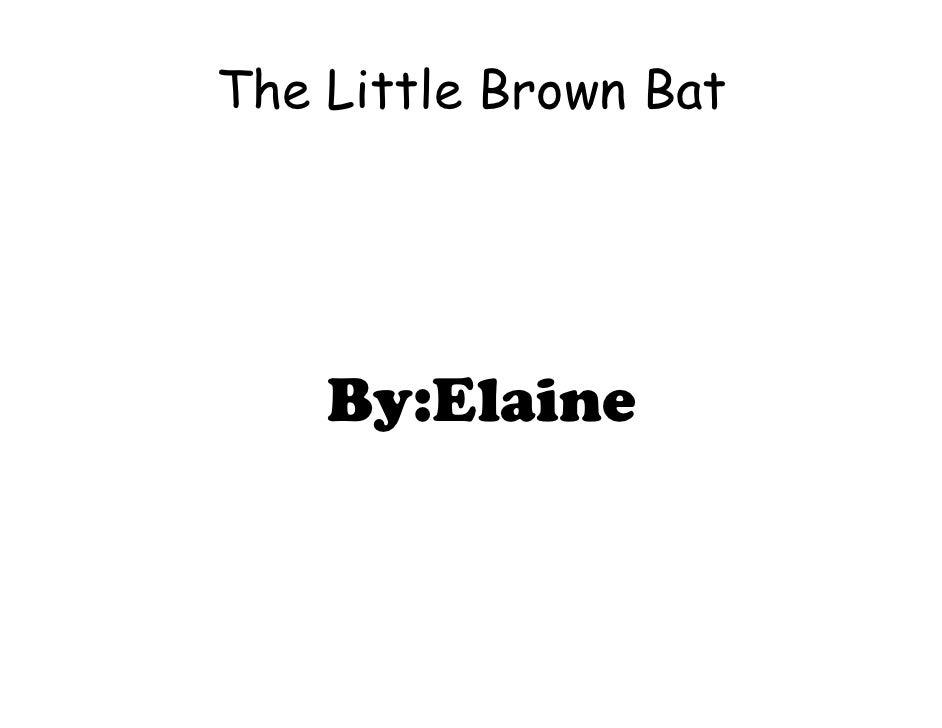 Little Brown Bat by Elaine