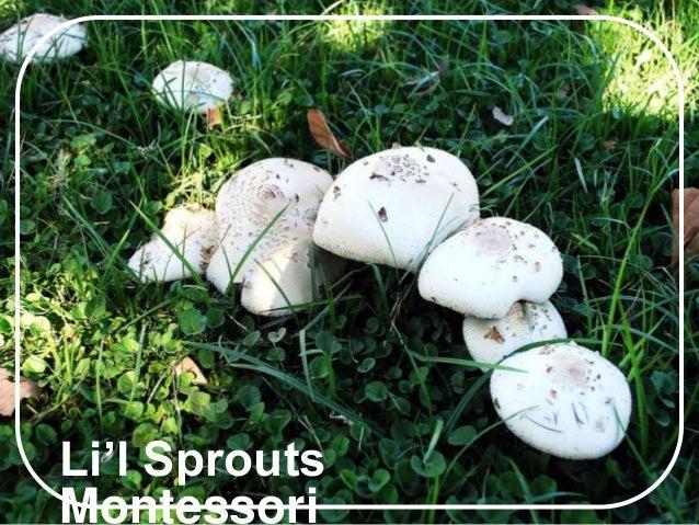 Li'l Sprouts Montessori