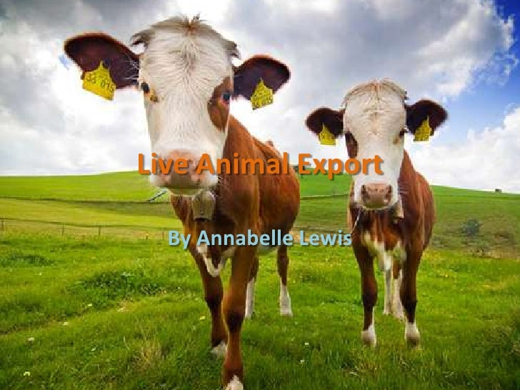 Live Animal Export <br />By Annabelle Lewis<br />