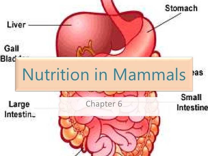Nutrition in Mammals<br />Chapter 6<br />