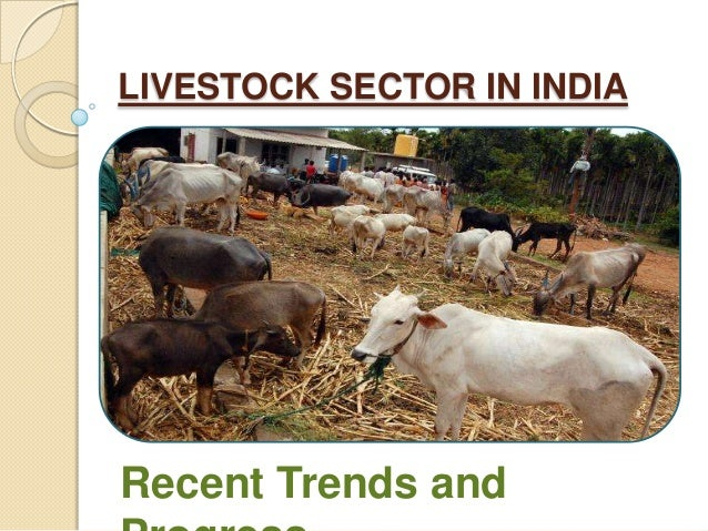 Livestock sector in india