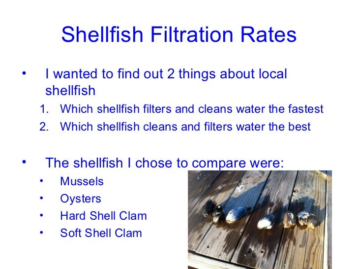 Shellfish Filtration Rates•       I wanted to find out 2 things about local        shellfish    1. Which shellfish filters...