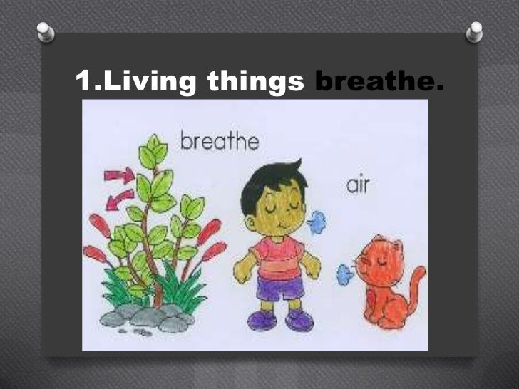 characteristics of living and nonliving things pdf