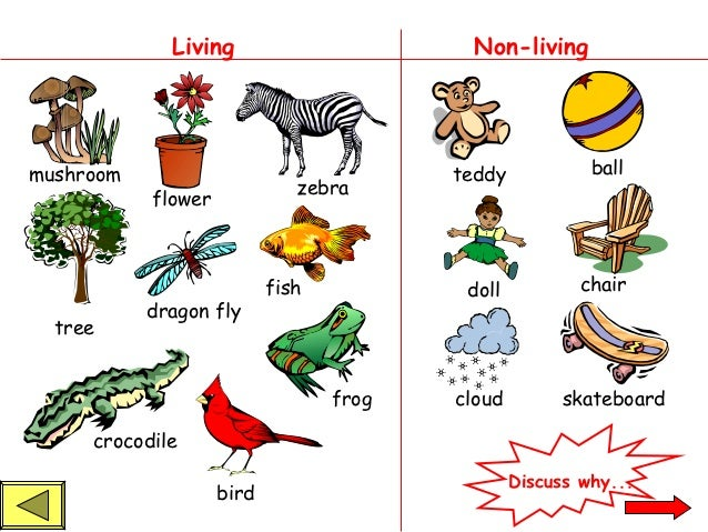 NEW 295 KINDERGARTEN WORKSHEET LIVING AND NONLIVING – Living Things Worksheet