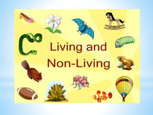 the human being and living the All living things fear being put to death putting oneself in the place of the other led buddhists in the past to think that non-human animals were inferior to human beings and so were entitled to fewer rights than human beings.