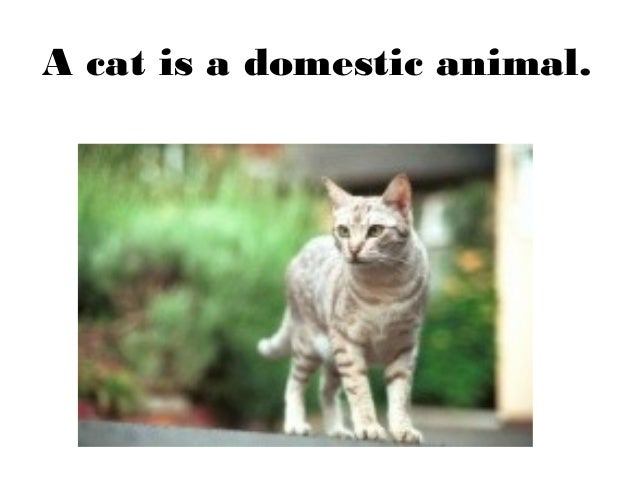 essay domestic animals Essay on domestic animals of dogs dogs are friendly, loyal house pets they are intelligent so they can provide services to people, such as working with police officers at airports searching bags for bombs and illegal drugs.