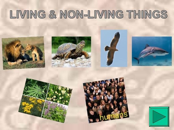 LIVING THINGS: ANIMALS