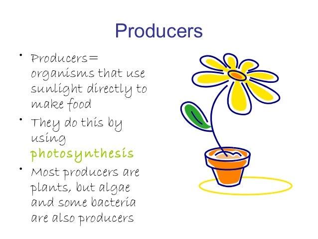 How Do Living Organisms Like Animals Obtain Energy From Food