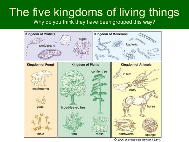 The five kingdoms of living things | Division and Worksheets