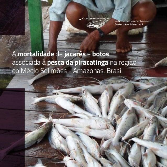 A mortalidade de jacarés e botos associada à pesca da piracatinga na região do Médio Solimões - Amazonas, Brasil