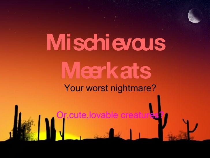 Mischievous Meerkats Your worst nightmare? Or,cute,lovable creatures?