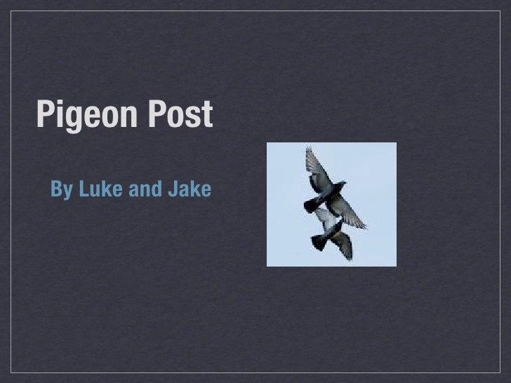 Lj Pigeon