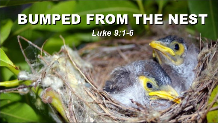 BUMPED FROM THE NEST Luke 9:1-6