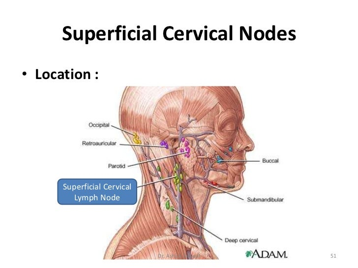 Lymphatic System & Cervical Lymph Nodes by Dr. Ashish jaiswal