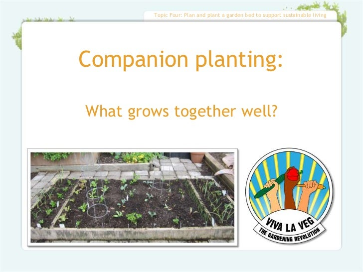 Topic Four: Plan and plant a garden bed to support sustainable livingCompanion planting:What grows together well?