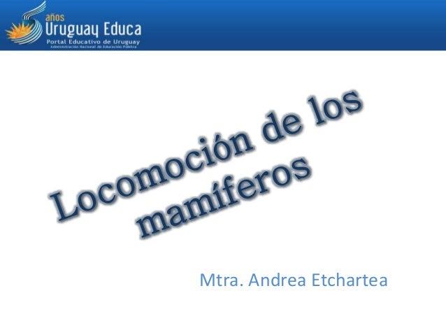 Mtra. Andrea Etchartea