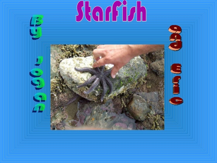 StarFish By Logan and Eric